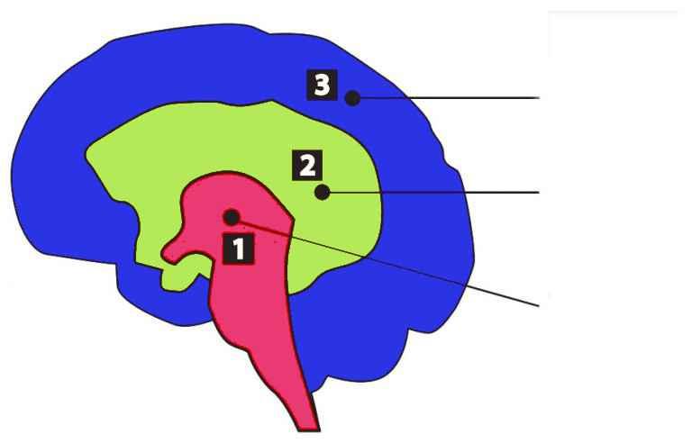 Il cervello trino - paul mclean - non ce n'è di coviddi senza speranza - cervello rettiliano